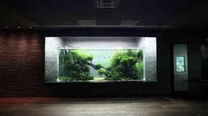 japanese aquascape aquascape in giant aquarium by takashi amano ada japan youtube