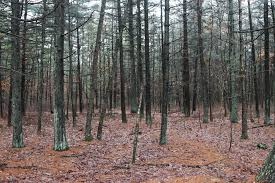 New Jersey forest images 11 things lurking in new jersey 39 s forests that can kill you jpg