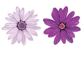 purple flower purple flower vectors free vector stock graphics