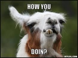 Alpaca Meme Generator - funny llama meme generator diy lol critters pinterest