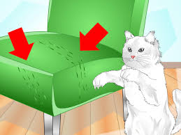 sofa that cats won t scratch 3 ways to get your cat to use a scratching post wikihow