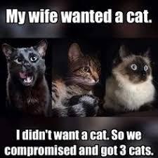 I Should Buy A Boat Meme Generator - i should buy a boat cat meme generator imgflip https imgflip