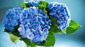 wedding flowers blue how to use hydrangeas in a centerpiece wedding flowers