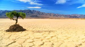 concept climate change of green tree growing in barren desert