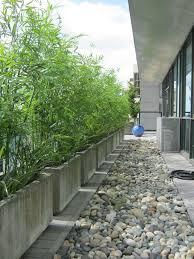 pflanzen als sichtschutz fã r balkon 62 besten gärten bilder auf gärten balkon und sichtschutz