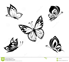 white butterfly set black white butterflies of black