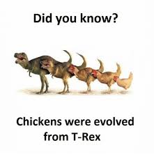 T Rex Meme - did you know chickens were evolved from t rex meme on me me