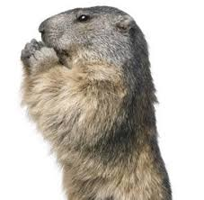 facts groundhogs groundhog facts havahart