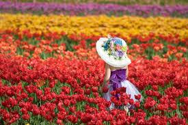 Spring Garden Ideas Spring Blooming Tulip U2013 Diy Growing Your Own Garden Ideas Holicoffee