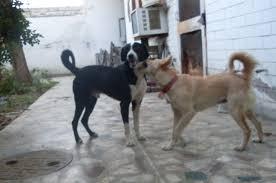 file fluffy littlefoot dabbu the backyard dogs playing with vivek