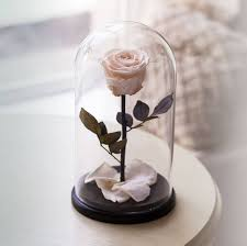beauty and the beast rose live forever rose in glass bella