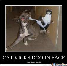 Dog Cat Meme - cat kicks dog in face by skill0wnya meme center