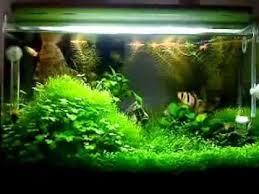 Aquascape Malaysia Fresh Water Aquarium From Malaysia Youtube