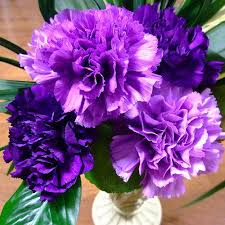 purple carnations purple carnation flower at rs 150 bunch carnation flower id
