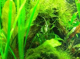 fish tank blog 55 gallon planted tank