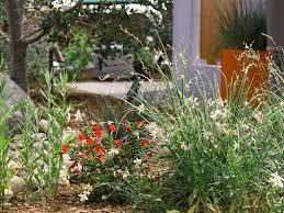 native plants san diego portfolio allee landscape design
