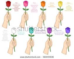 different color roses vector set different color roses meaning stock vector 581033536