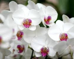 Orchid Flower Pic - one big happy family orchids 101 the biology behind these