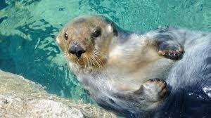 saving wildlife and wild places new york aquarium