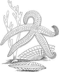 free printable sea life coloring pages 88 best marine life coloring pages images on pinterest marine
