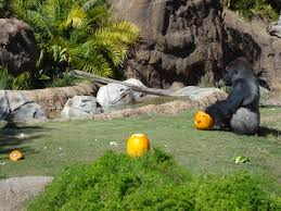 celebrate halloween on the wild side at boo at the zoo los angeles