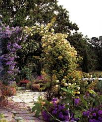 gardening news and notes wild roses an easy alternative how you
