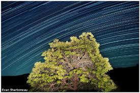 Light Painting Landscape Photography 1 Star Trails Tree Light Painting Jpg
