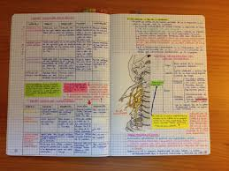 mcat study guide pdf guide anatomy notes for medical students pdf at best anatomy learn