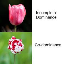 genetic dominance