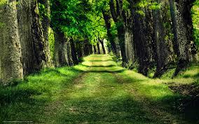 papier peint de bureau tlcharger fond d ecran nature papier peint arbres parc fonds d