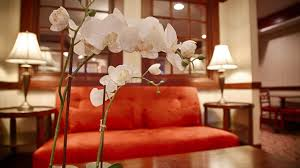 lexus of westport service specials best western plus fairfield hotel fairfield connecticut