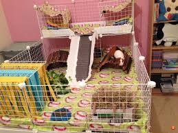 Cages For Guinea Pigs C U0026c Need Help With The Dimensions Of C U0026c Cage Coroplast New