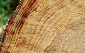 tree rings images Aging life and tree rings the eden alternative jpg