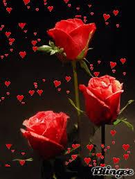 imagenes de amor con rosas animadas gif animados de amor con rosas rojas y corazones imagenes y frases