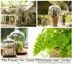 ten plants to grow in closed terrariums u0026 under cloches