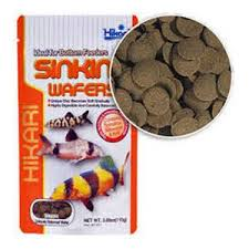 hikari sinking wafers review hikari tropical sinking wafers for catfish loaches and bottom