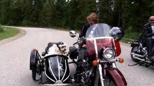 boxer dog on motorcycle petey the sidecar riding dog here comes the rain youtube youtube