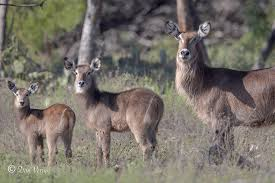 Texas Wildlife Tours images Yo ranch headquarters hunting and exotic game tours png