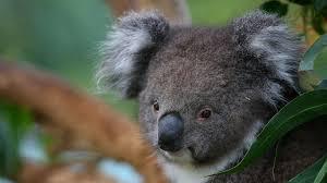 imagenes animales australia animales de australia tourism australia