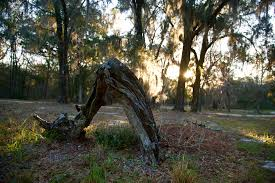 memorial tributes memorial tributes prairie creek conservation cemetery