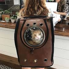 how to travel with a cat images Space dome travel cat backpack meowingtons jpg