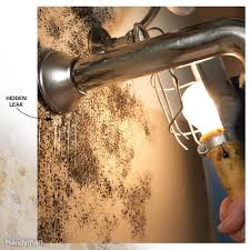 Removing Mold From Ceiling by Mold And Mildew Removal The Family Handyman