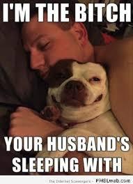 Funny Bitch Memes - 3 i m the bitch funny dog meme pmslweb