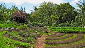 Permaculture Urban Garden Unplug Yourself From The Industrial Food System With Permaculture