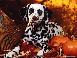 halloween desktop background themes free halloween puppy backgrounds