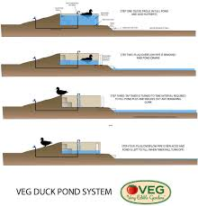 veg design solutions part three how to drain a duck pond without