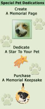 pet bereavement petseverlasting pet loss community rainbow bridge pet bereavement