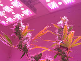 best led weed grow light how to grow cannabis gallery advanced led lights