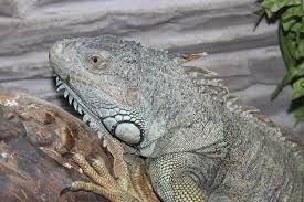 reptile terrarium monitor lizard animal stock image image 46749527