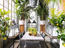 190 best indoor u0026 hanging plants images on pinterest plants